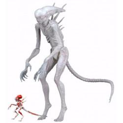 Figurine - Alien Covenant - Neomorph - 18 cm - NECA