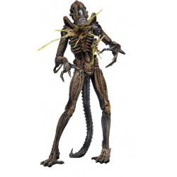 Figurine - Aliens - serie 12 - Xenomorph Warrior Battle Damaged (Brown) - 18 cm - NECA